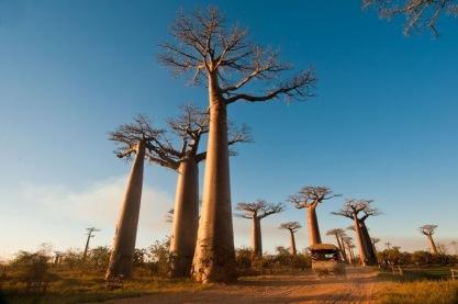 Madagaszkár